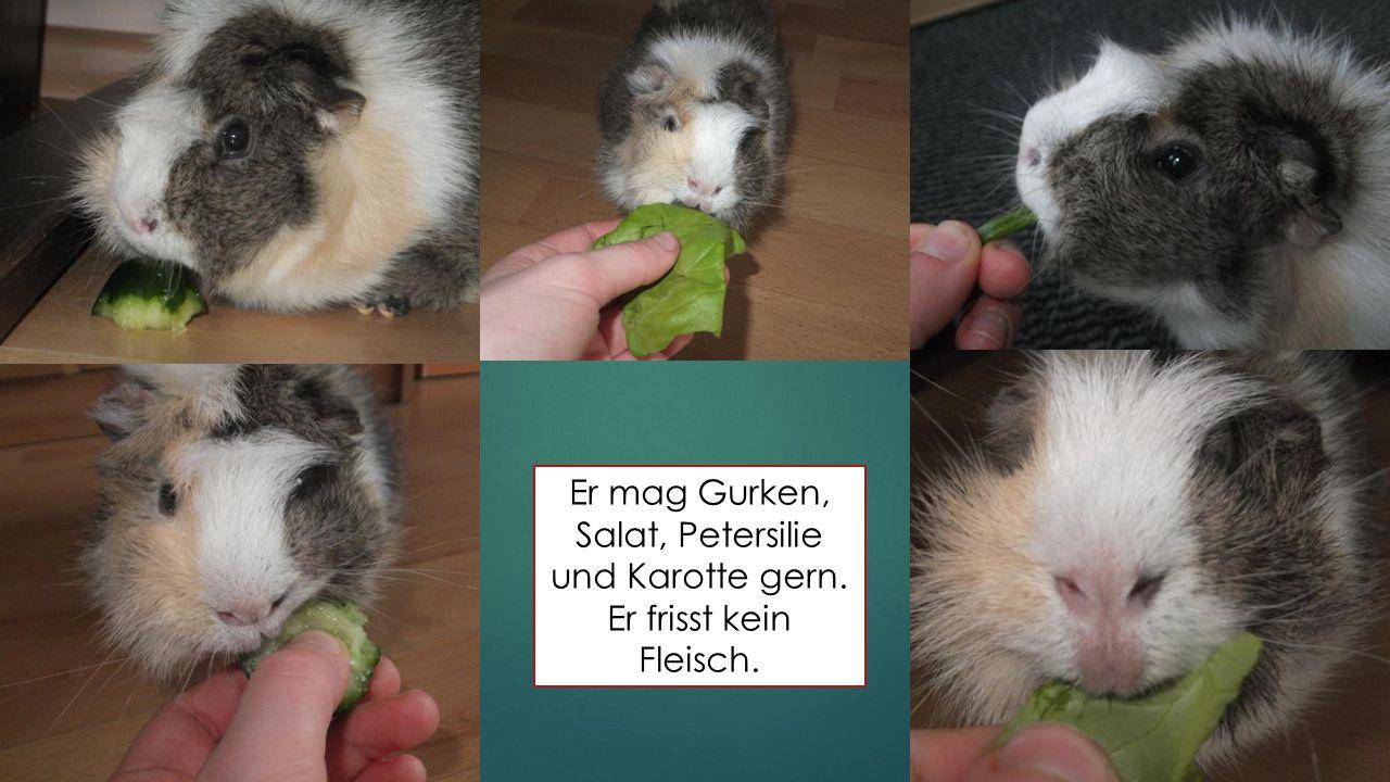 Er mag Gurken, Salat, Petersilie und Karotte gern