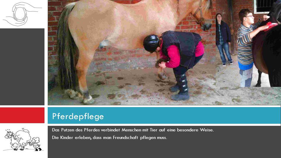 Pferdepflege Das Putzen des Pferdes verbindet Menschen mit Tier auf eine besondere Weise.