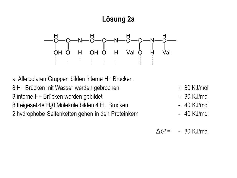 Lösung 2a a. Alle polaren Gruppen bilden interne H... Brücken.