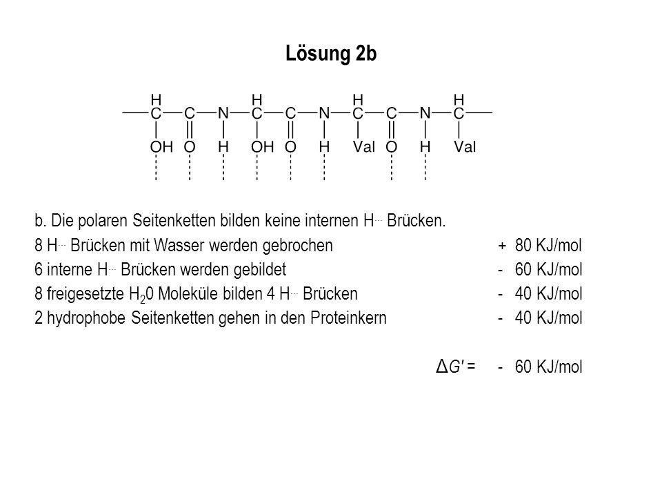 Lösung 2b b. Die polaren Seitenketten bilden keine internen H... Brücken. 8 H... Brücken mit Wasser werden gebrochen + 80 KJ/mol.