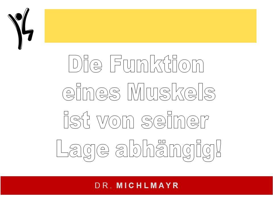 Die Funktion eines Muskels ist von seiner Lage abhängig!