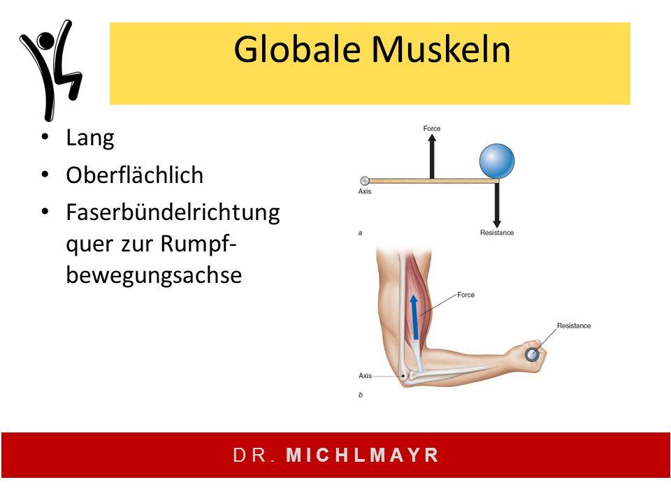 Globale Muskeln Lang Oberflächlich