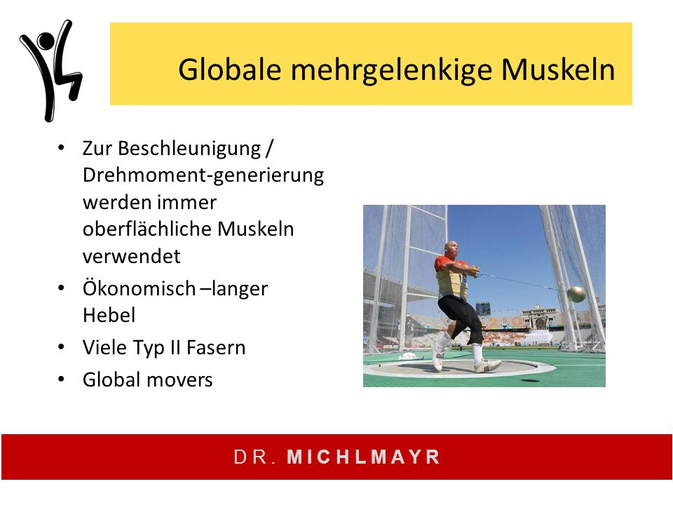 Globale mehrgelenkige Muskeln