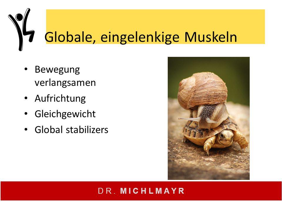 Globale, eingelenkige Muskeln