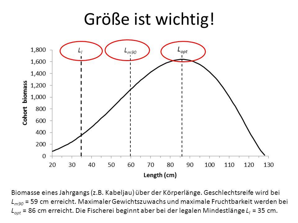 Größe ist wichtig! Ll. Lm90. Biomasse eines Jahrgangs (z.B. Kabeljau) über der Körperlänge. Geschlechtsreife wird bei.