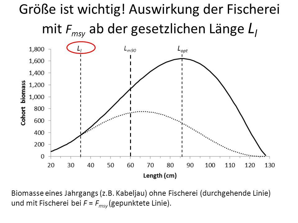 Größe ist wichtig! Auswirkung der Fischerei mit Fmsy ab der gesetzlichen Länge Ll