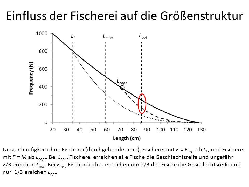 Einfluss der Fischerei auf die Größenstruktur