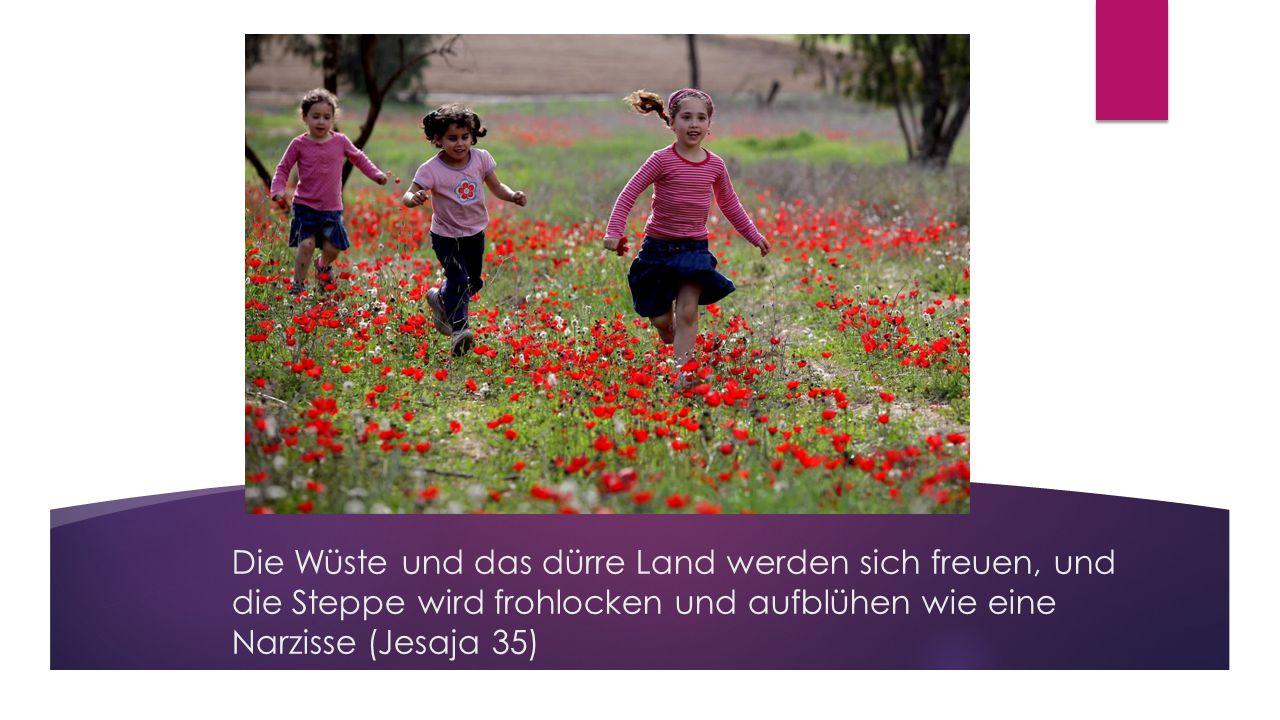 Die Wüste und das dürre Land werden sich freuen, und die Steppe wird frohlocken und aufblühen wie eine Narzisse (Jesaja 35)