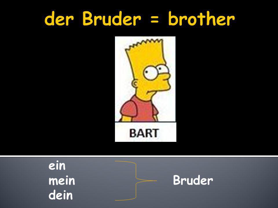 der Bruder = brother ein mein Bruder dein