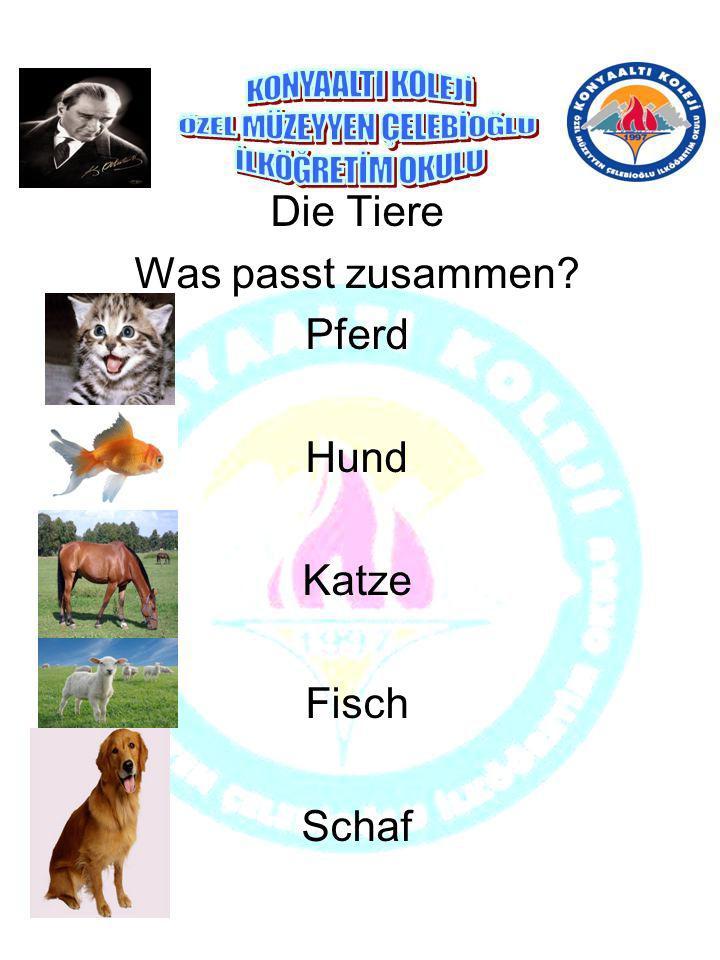 Die Tiere Was passt zusammen Pferd Hund Katze Fisch Schaf