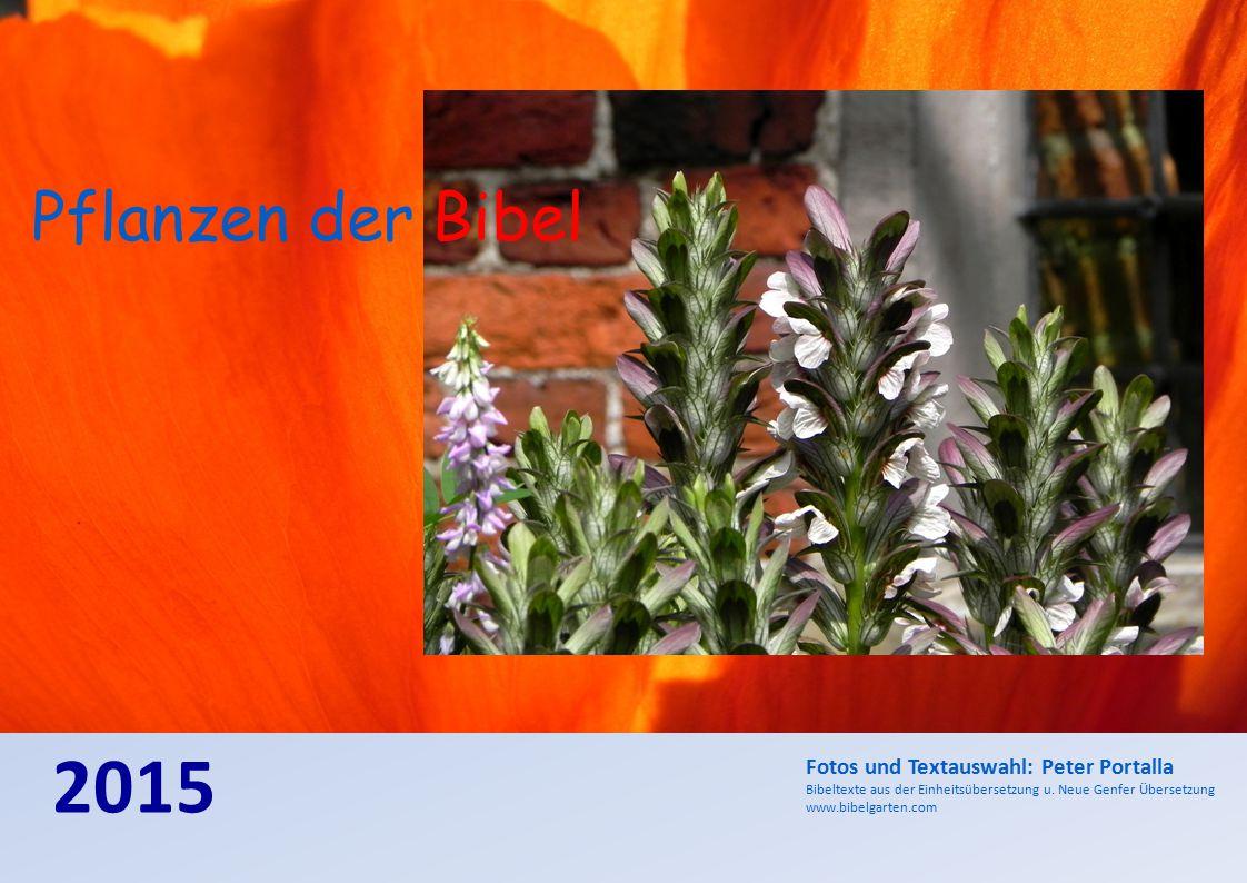 2015 Pflanzen der Bibel Fotos und Textauswahl: Peter Portalla