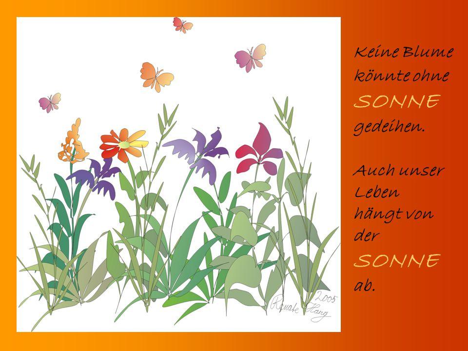 SONNE SONNE ab. Keine Blume könnte ohne gedeihen. Auch unser Leben