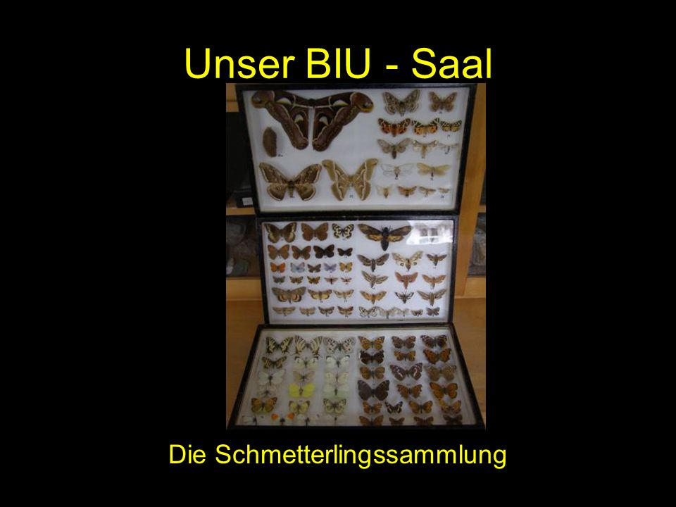 Die Schmetterlingssammlung