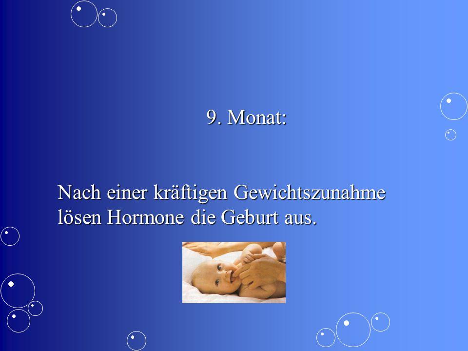 9. Monat: Nach einer kräftigen Gewichtszunahme lösen Hormone die Geburt aus.
