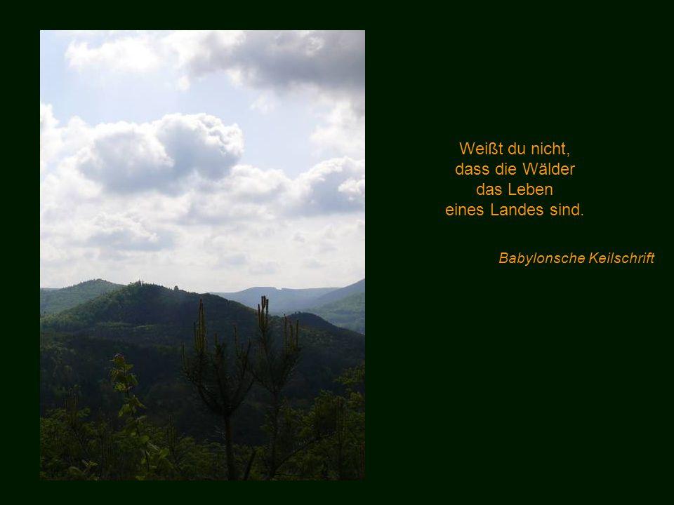 Weißt du nicht, dass die Wälder das Leben eines Landes sind.