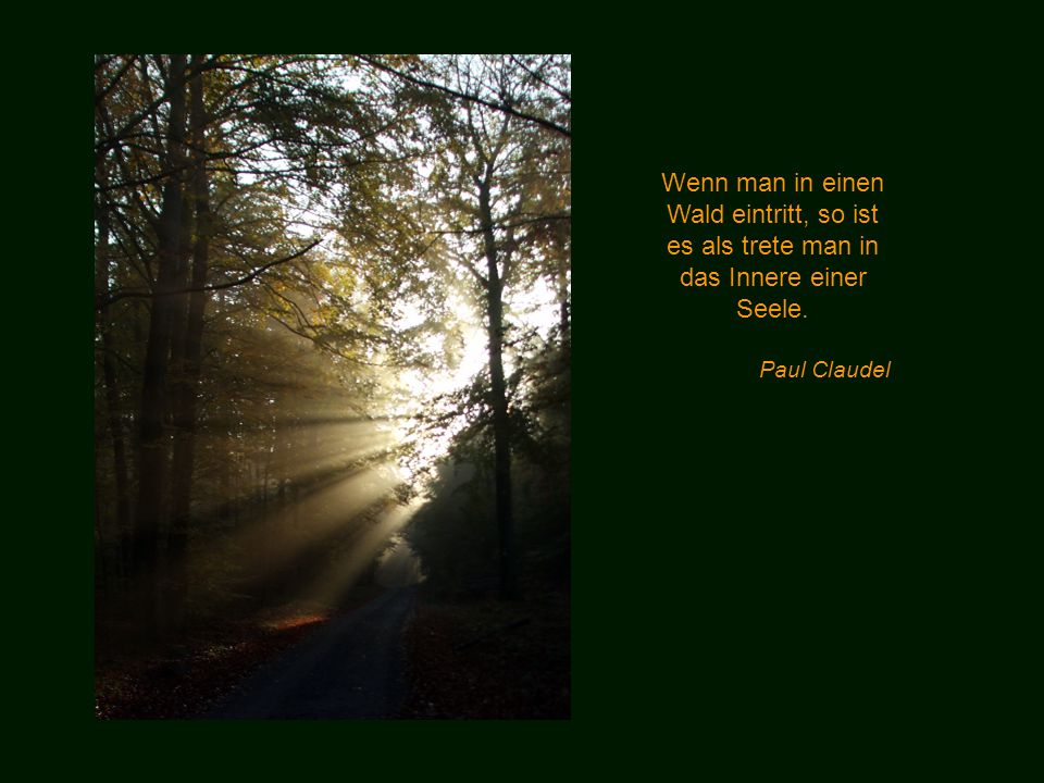Wenn man in einen Wald eintritt, so ist es als trete man in das Innere einer Seele.