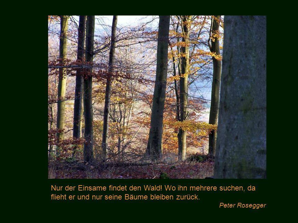 Nur der Einsame findet den Wald