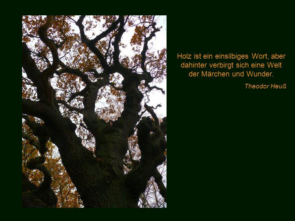 Holz ist ein einsilbiges Wort, aber dahinter verbirgt sich eine Welt der Märchen und Wunder.