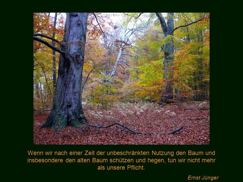 Wenn wir nach einer Zeit der unbeschränkten Nutzung den Baum und insbesondere den alten Baum schützen und hegen, tun wir nicht mehr als unsere Pflicht.