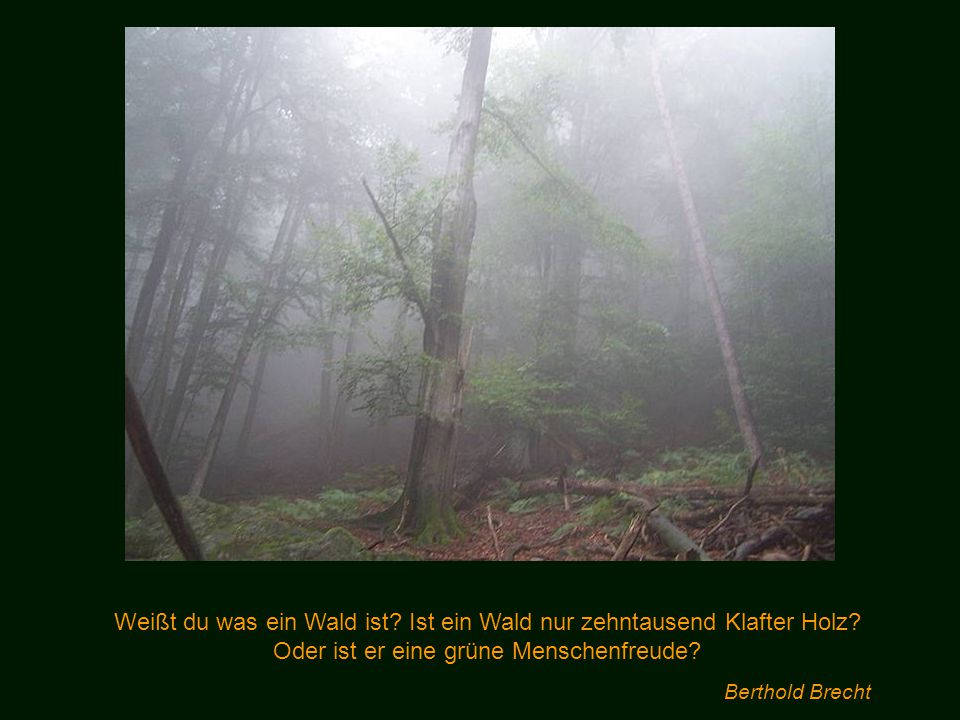 Weißt du was ein Wald ist. Ist ein Wald nur zehntausend Klafter Holz