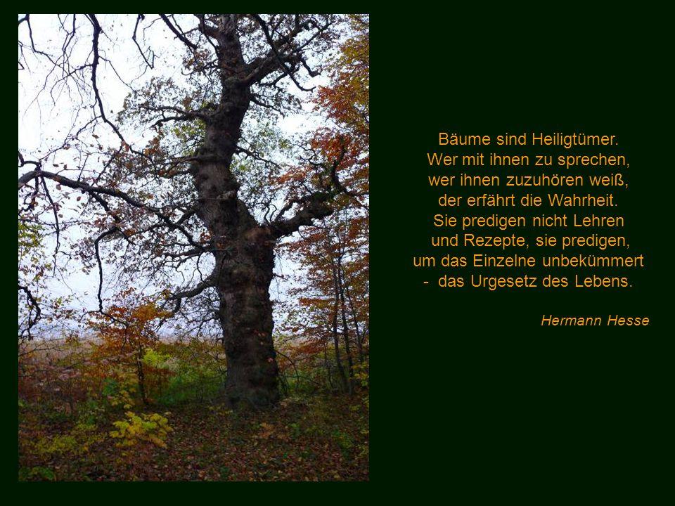 Bäume sind Heiligtümer. Wer mit ihnen zu sprechen,