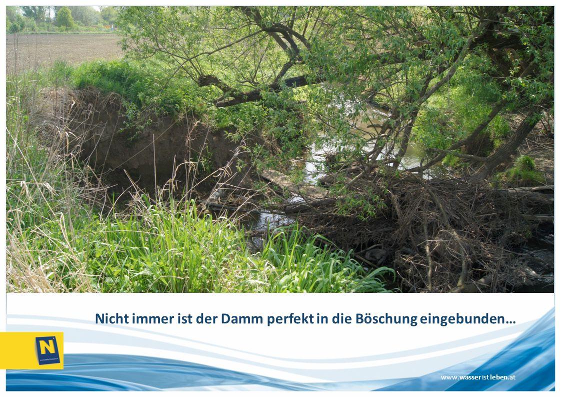 Nicht immer ist der Damm perfekt in die Böschung eingebunden…