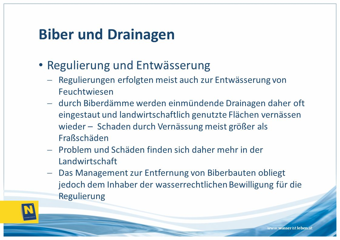 Biber und Drainagen Regulierung und Entwässerung