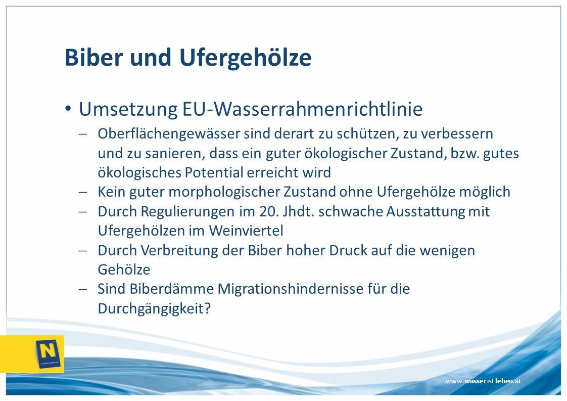 Biber und Ufergehölze Umsetzung EU-Wasserrahmenrichtlinie