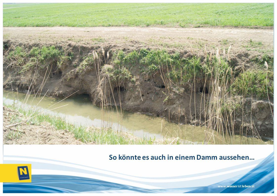 So könnte es auch in einem Damm aussehen…