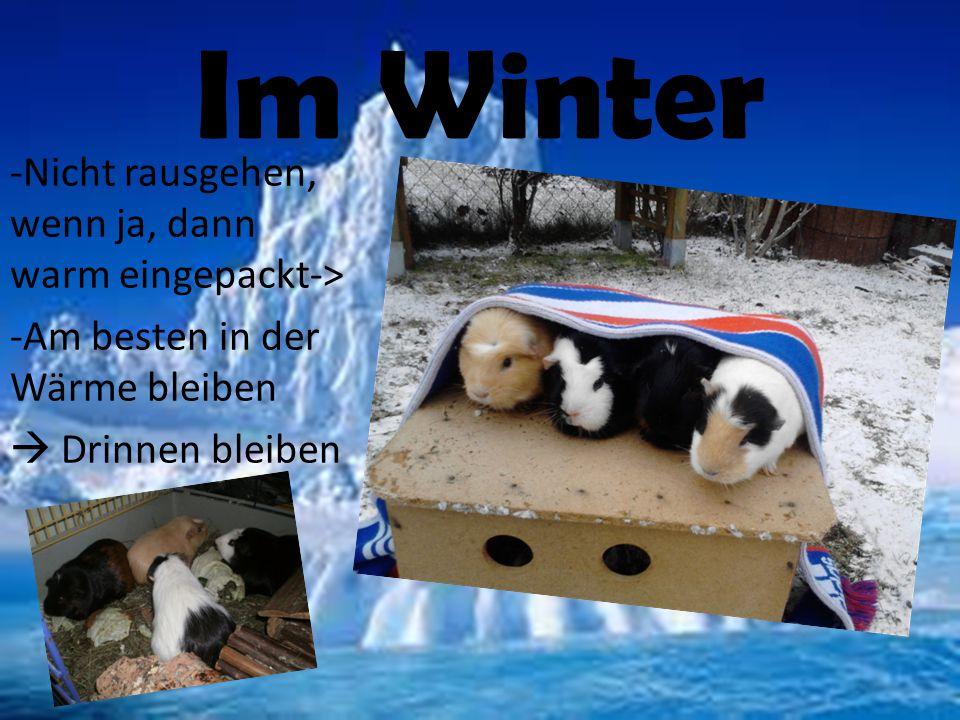 Im Winter -Nicht rausgehen, wenn ja, dann warm eingepackt-> -Am besten in der Wärme bleiben  Drinnen bleiben