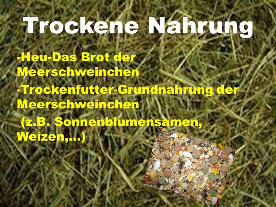 Trockene Nahrung -Heu-Das Brot der Meerschweinchen -Trockenfutter-Grundnahrung der Meerschweinchen (z.B.