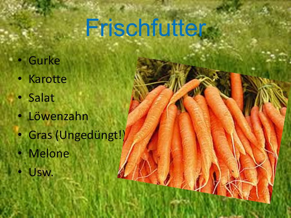 Frischfutter Gurke Karotte Salat Löwenzahn Gras (Ungedüngt!) Melone