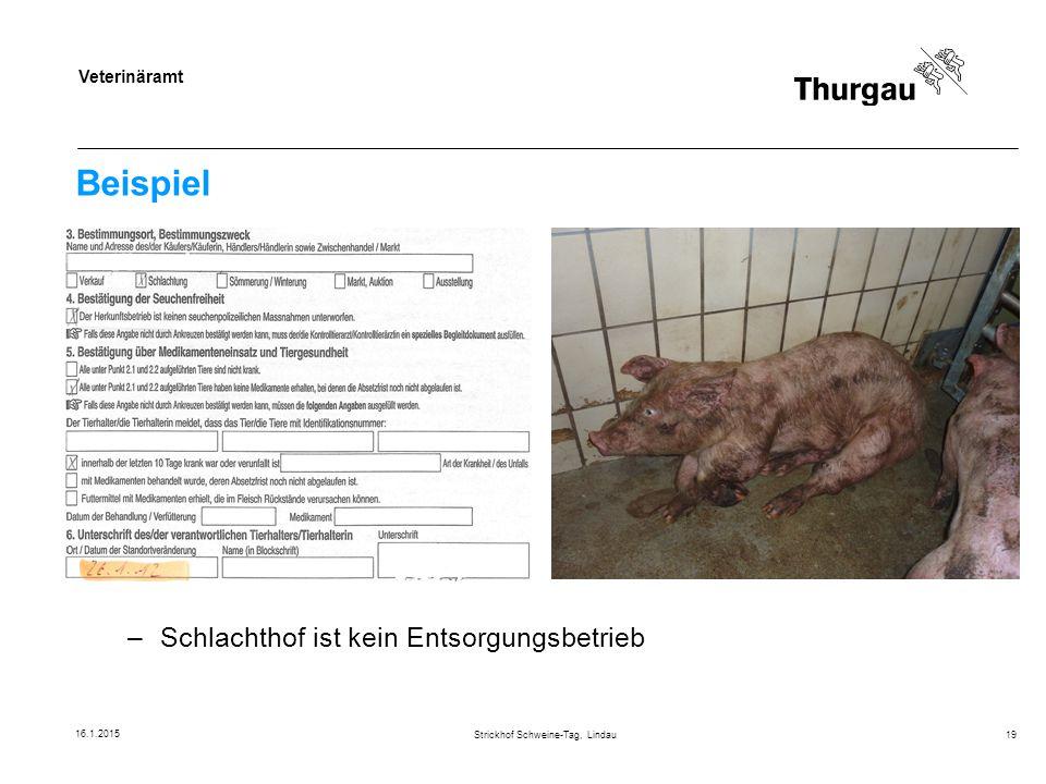 Strickhof Schweine-Tag, Lindau