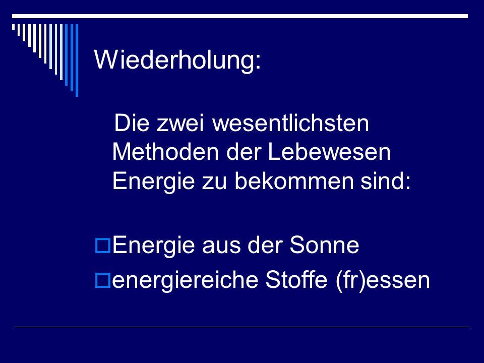 Wiederholung: Die zwei wesentlichsten Methoden der Lebewesen Energie zu bekommen sind: Energie aus der Sonne.