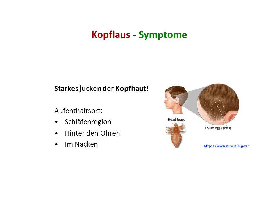 Kopflaus - Symptome Starkes jucken der Kopfhaut! Aufenthaltsort: