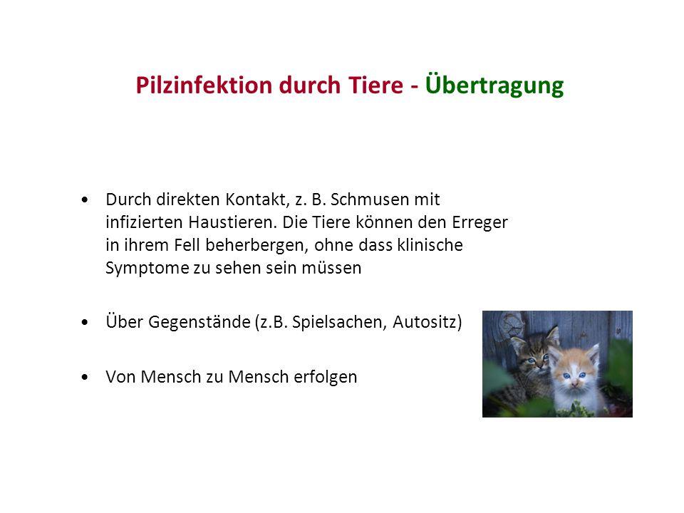 Pilzinfektion durch Tiere - Übertragung