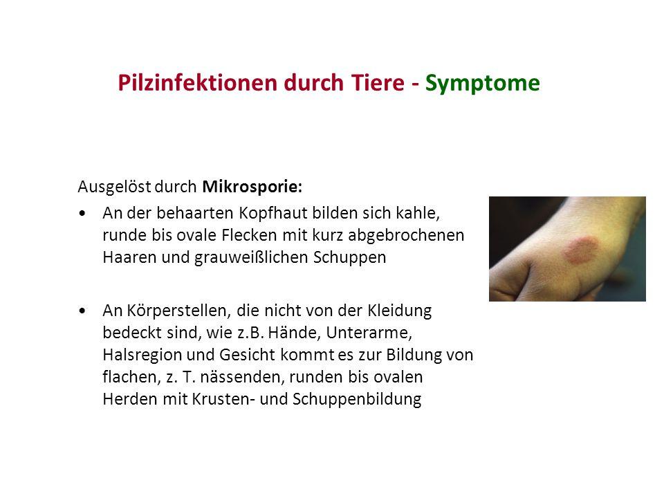 Pilzinfektionen durch Tiere - Symptome