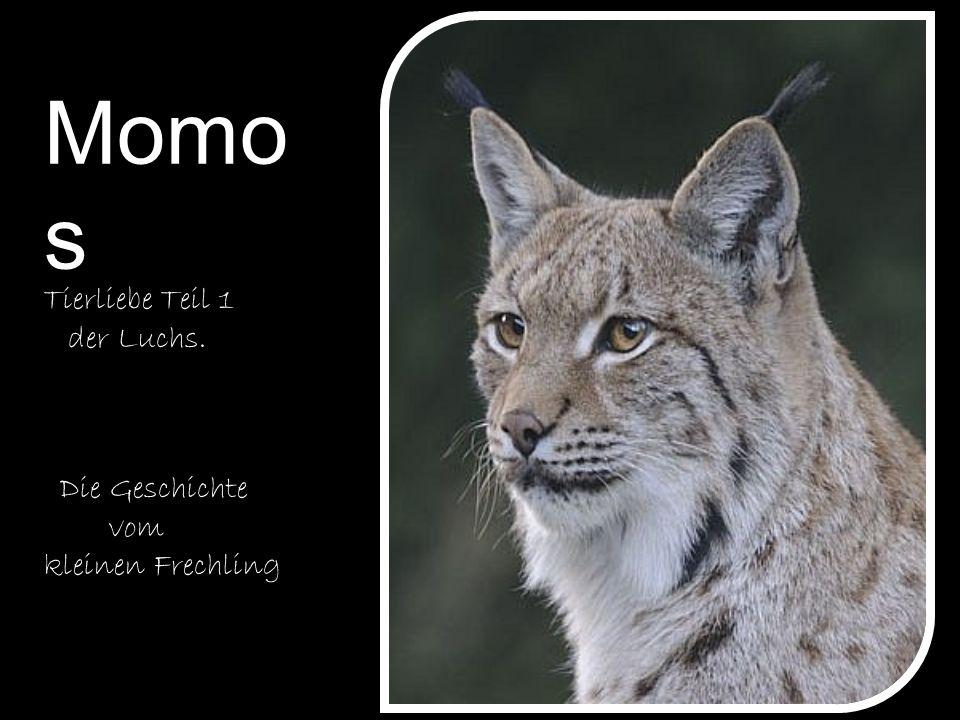 Momos Tierliebe Teil 1 der Luchs. Die Geschichte vom kleinen Frechling