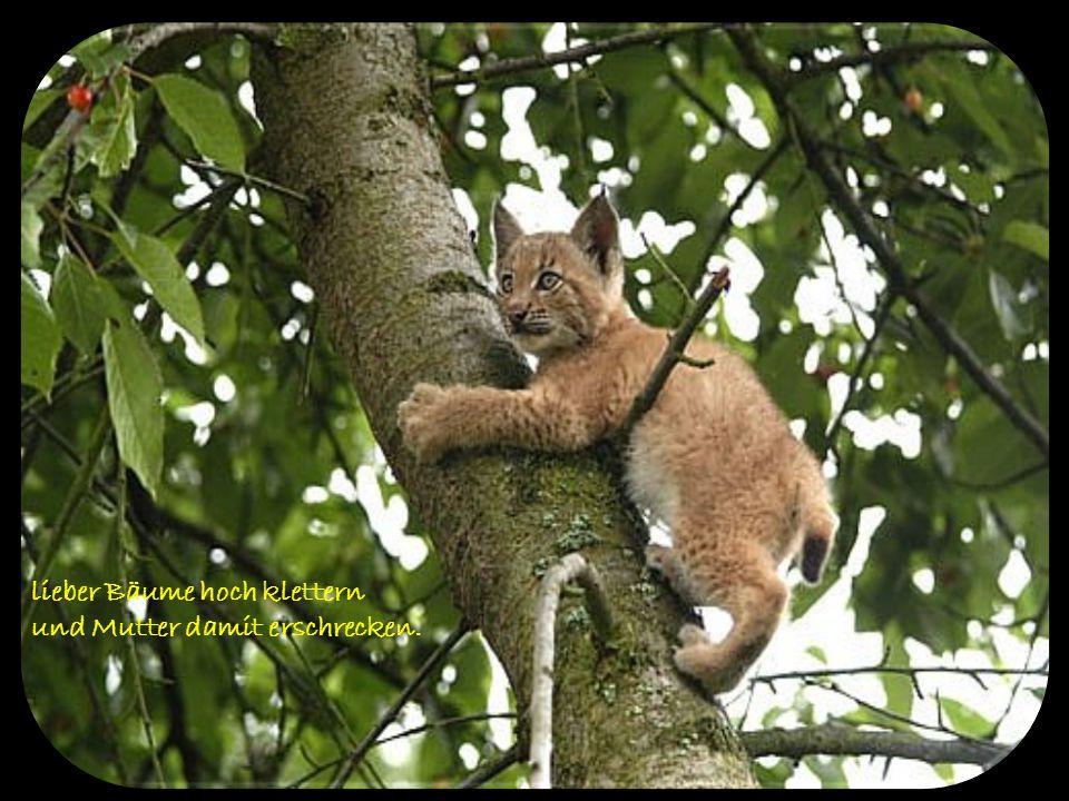 lieber Bäume hoch klettern