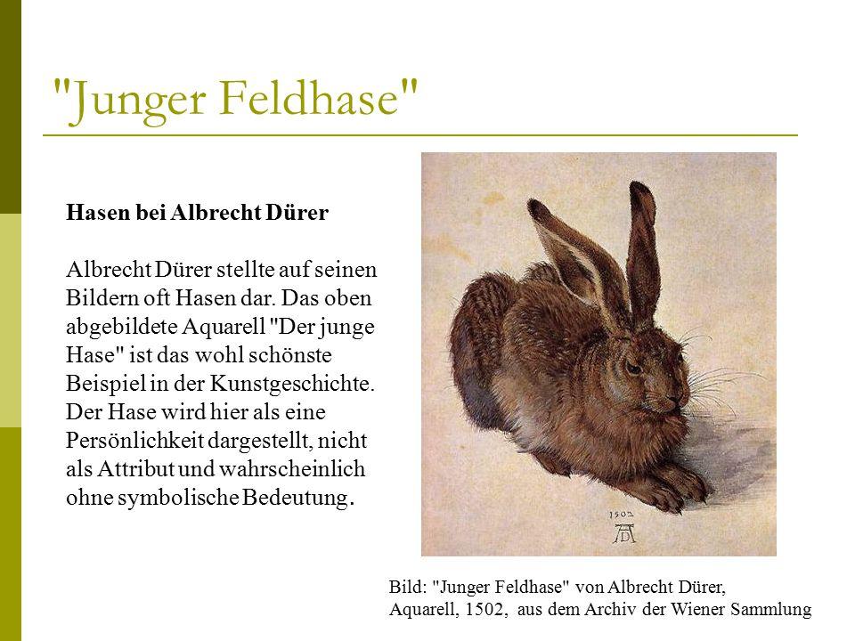 Junger Feldhase Hasen bei Albrecht Dürer