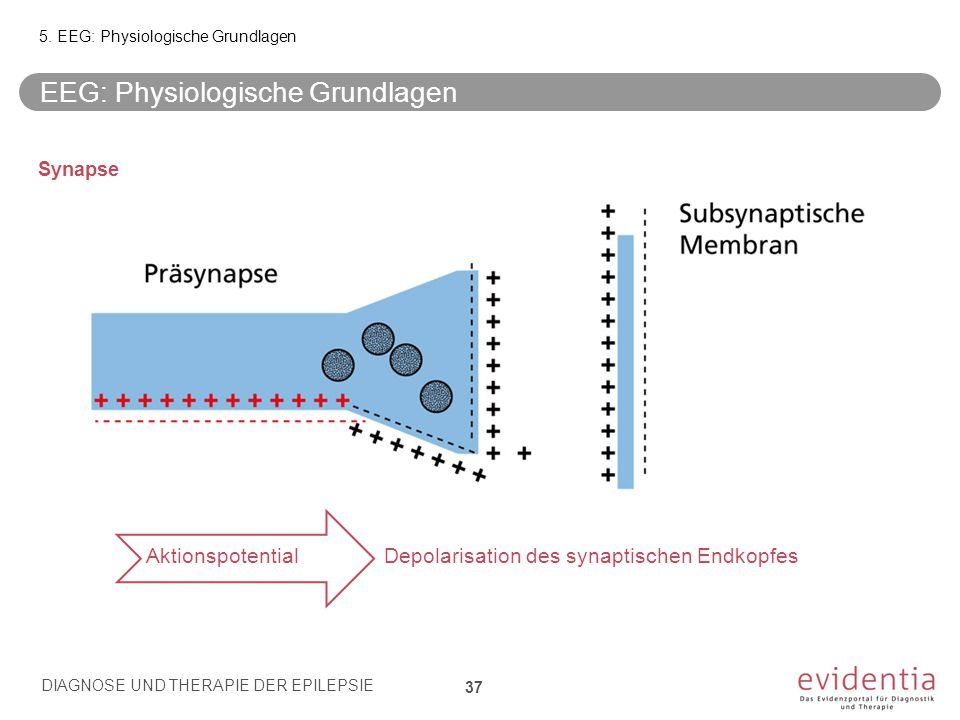 EEG: Physiologische Grundlagen