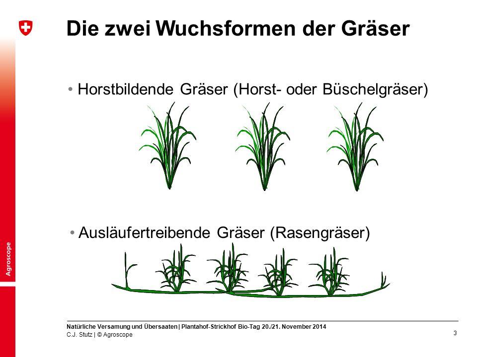 Die zwei Wuchsformen der Gräser