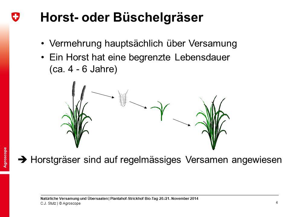 Horst- oder Büschelgräser