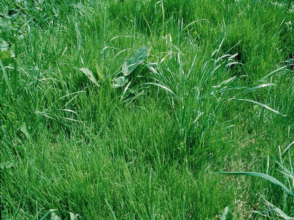Förderung von Futtergräsern durch natürliche Versamung oder Übersaaten