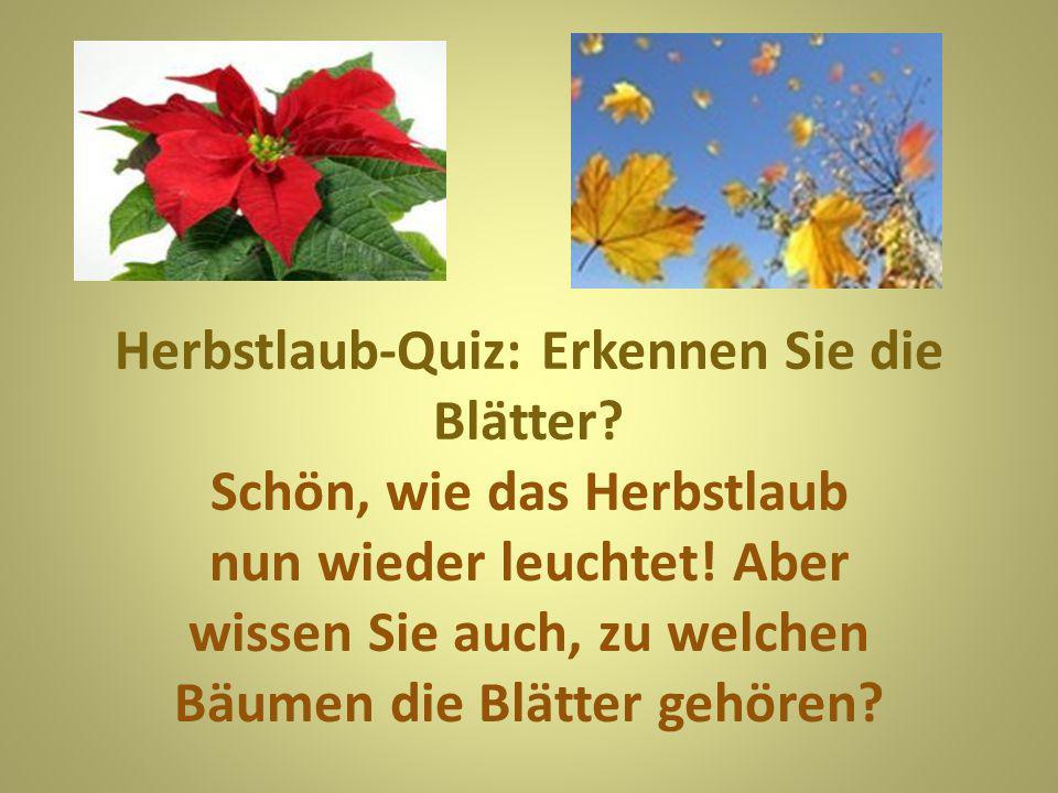 Herbstlaub-Quiz: Erkennen Sie die Blätter