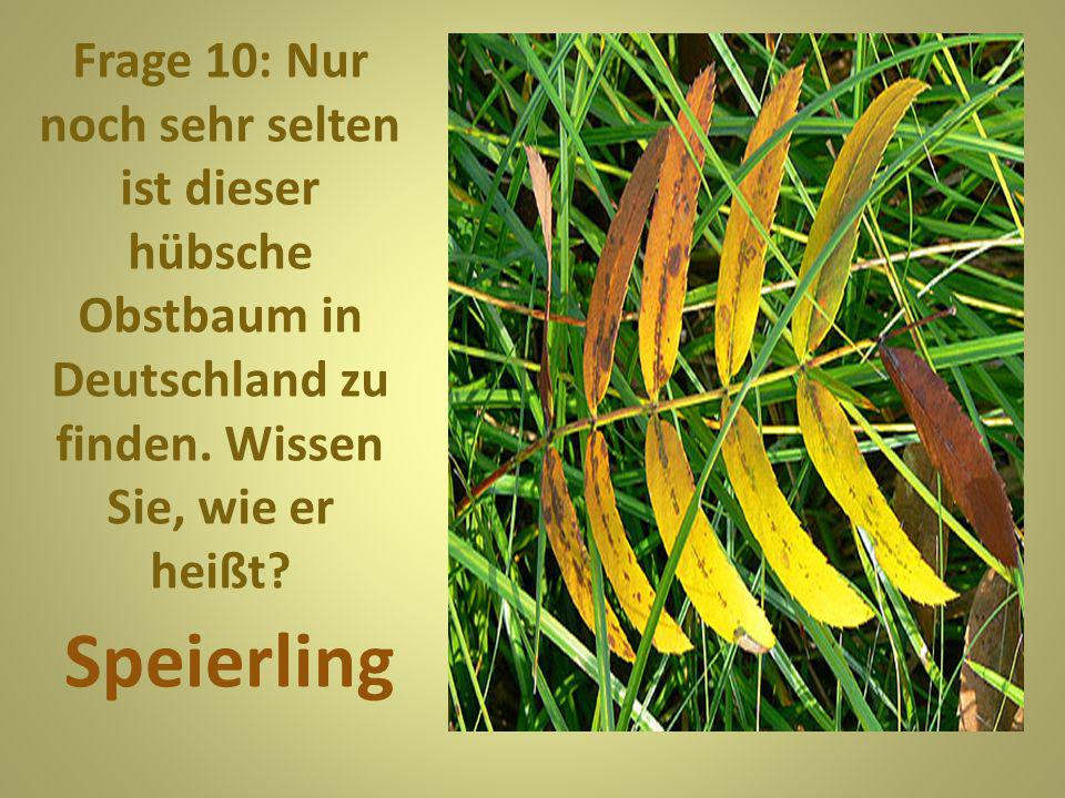 Frage 10: Nur noch sehr selten ist dieser hübsche Obstbaum in Deutschland zu finden. Wissen Sie, wie er heißt