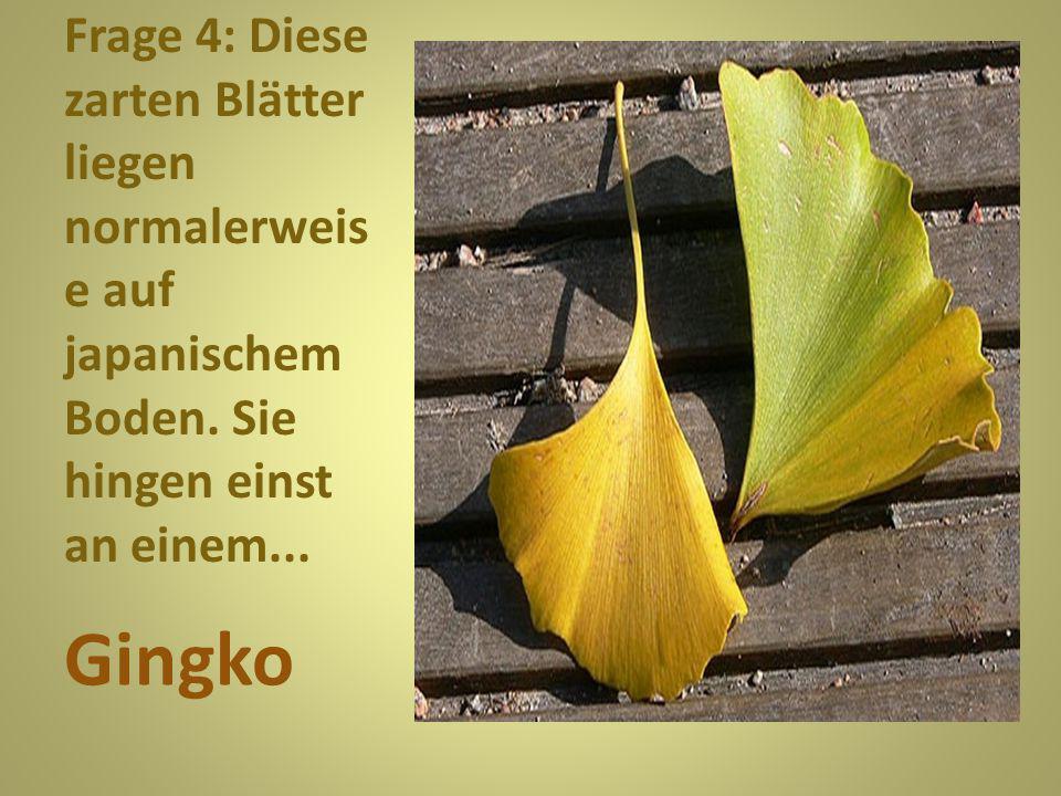 Frage 4: Diese zarten Blätter liegen normalerweise auf japanischem Boden. Sie hingen einst an einem...