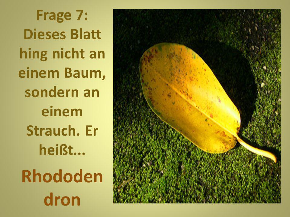 Frage 7: Dieses Blatt hing nicht an einem Baum, sondern an einem Strauch. Er heißt...