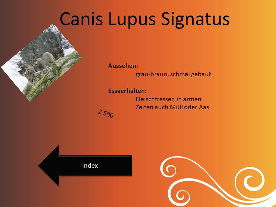 Canis Lupus Signatus Aussehen: grau-braun, schmal gebaut Essverhalten: