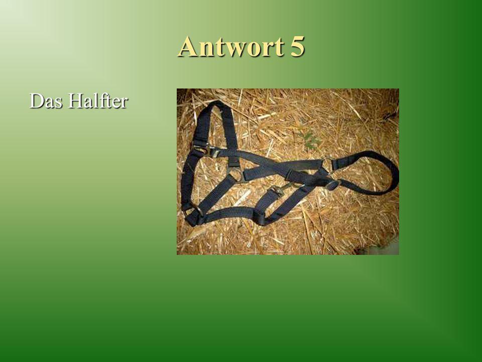 Antwort 5 Das Halfter